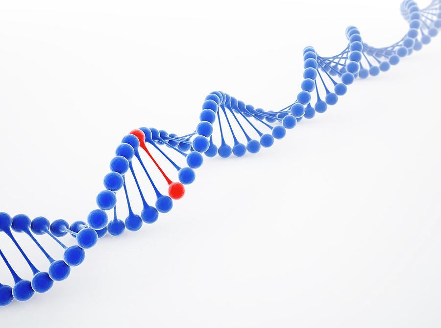 Dna Molecule, Artwork Digital Art by Science Photo Library - Andrzej Wojcicki