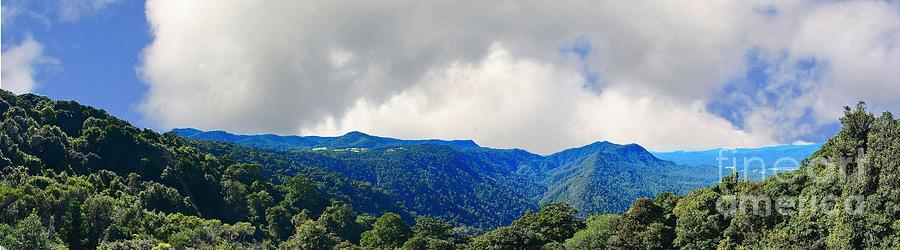 Dorrigo Photograph - Dorrigo National Park by Graham Buffinton