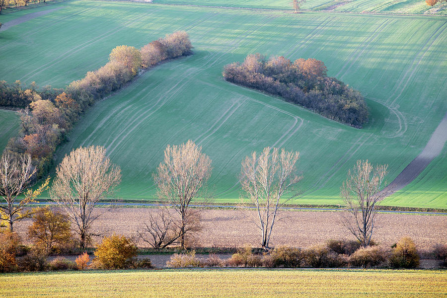 Autumn In South Moravia 6 Photograph