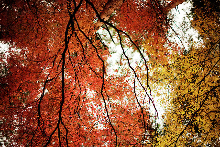 Fall Colors In Japan Photograph by Jdphotography