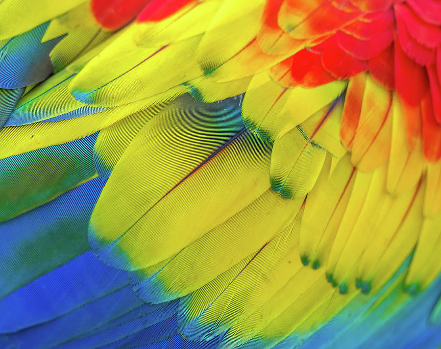 Feathers by Carlene Smith