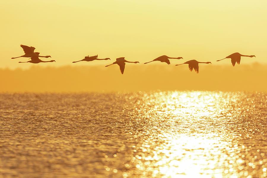 Flamingos in flight by Pablo Rodriguez Merkel
