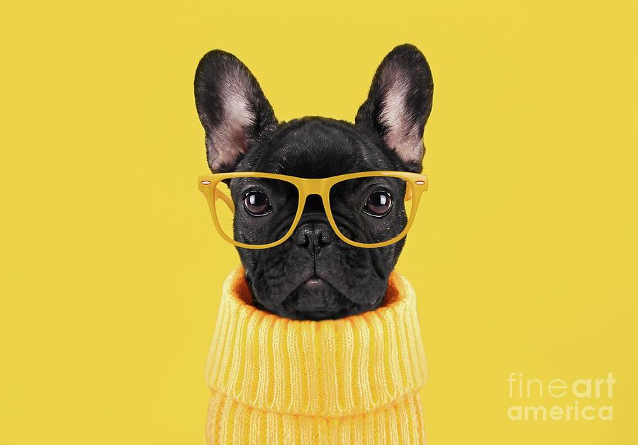 French Bulldog Puppy Photograph by Retales Botijero