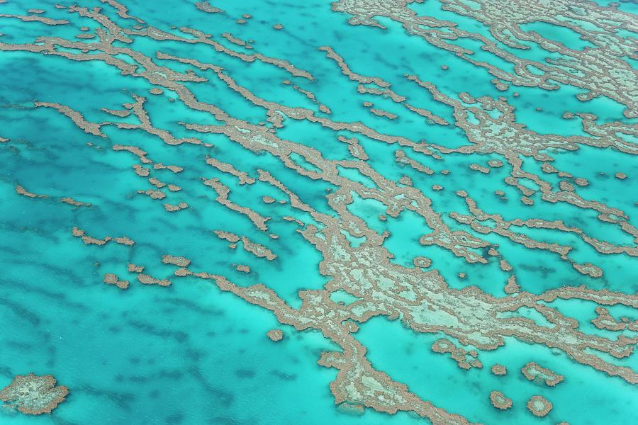 Great Barrier Reef, Queensland Photograph by Peter Adams