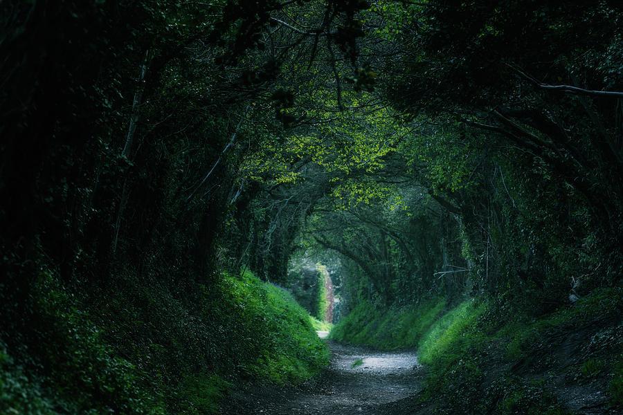 Halnaker - England by Joana Kruse