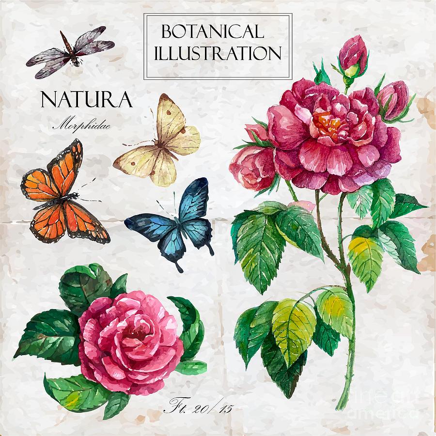 Engraving Digital Art - Hand Drawn Botanical Illustration In by Yana Fefelova