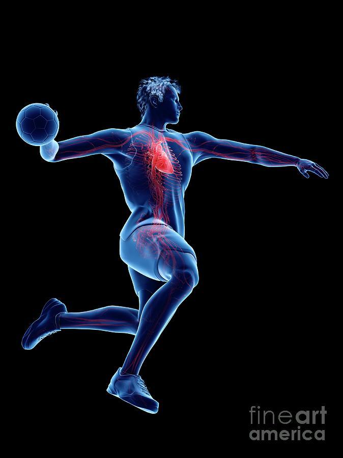3d Photograph - Handball Players Heart 2 by Sebastian Kaulitzki/science Photo Library