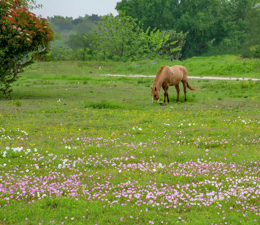 Horse in wildfowers Photograph by Brian Kinney