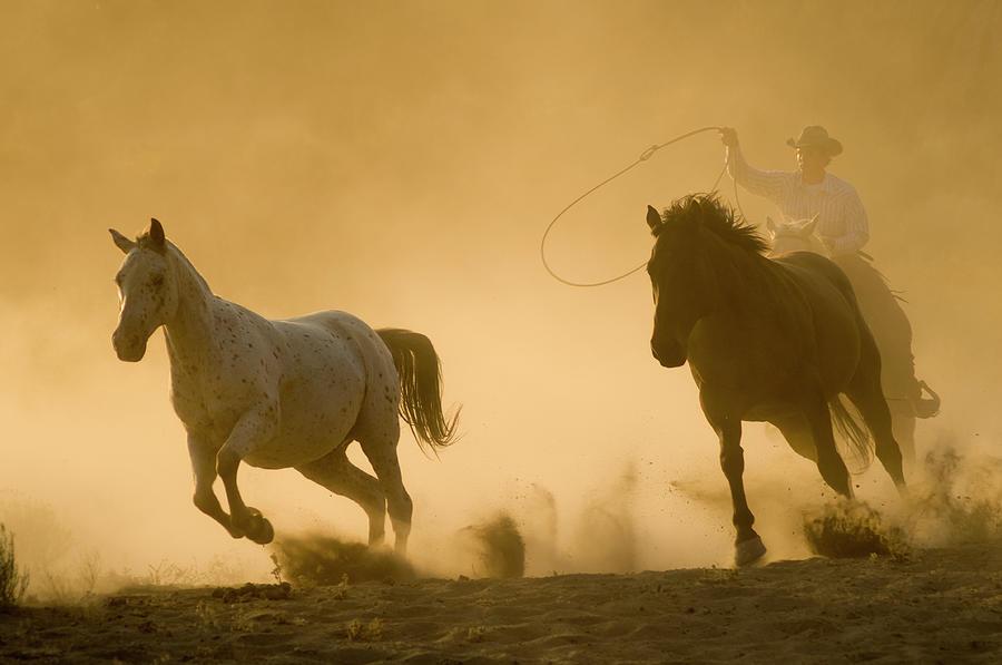 Horses Photograph by Garyalvis