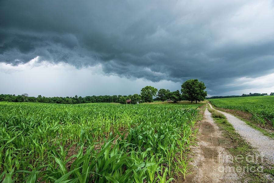 Indiana Cornfield Summer Thunderstorm by Gary Whitton