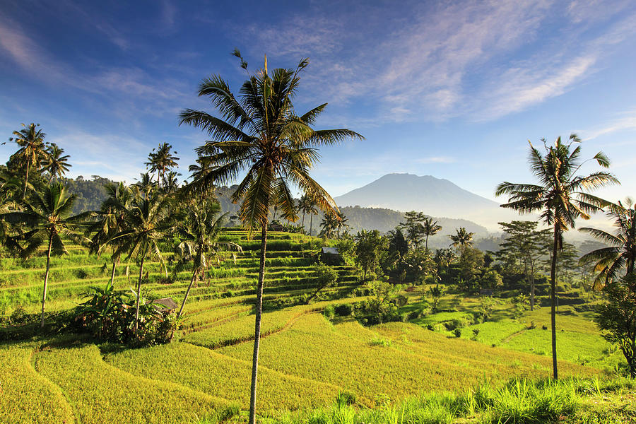 Indonesia, Bali, Rice Fields And Agung Photograph by Michele Falzone