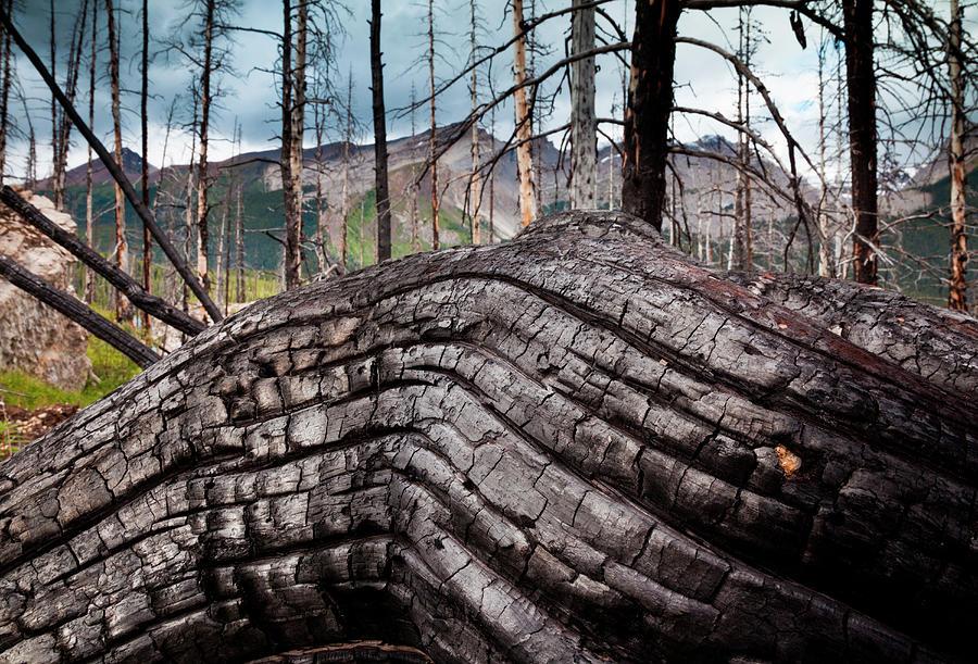 Jasper National Park, Alberta, Canada Photograph by Mint Images/ Art Wolfe