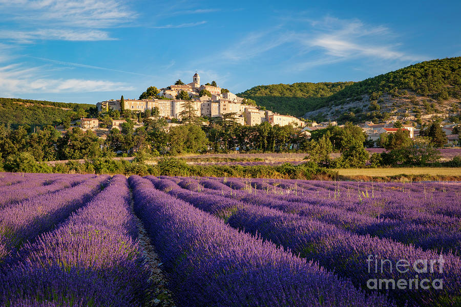 Lavender Field Below Banon by Brian Jannsen