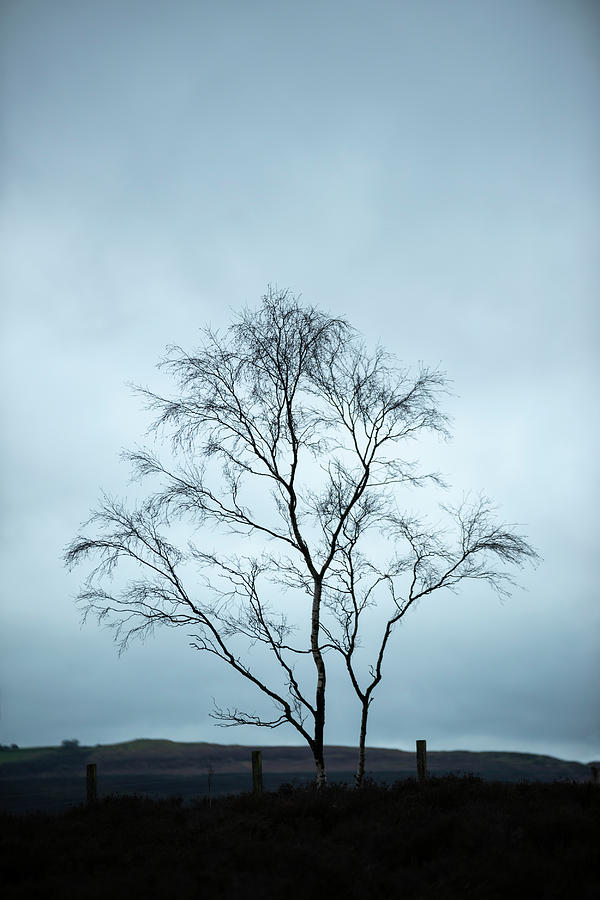 Landscape Photograph - Moody Winter Landscape Image Of Skeletal Trees In Peak District  by Matthew Gibson