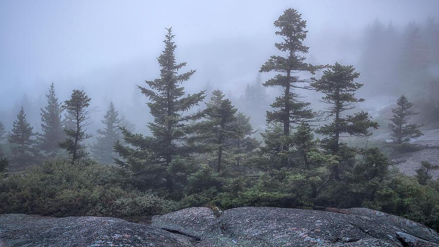 Morning Mist by Robert Fawcett