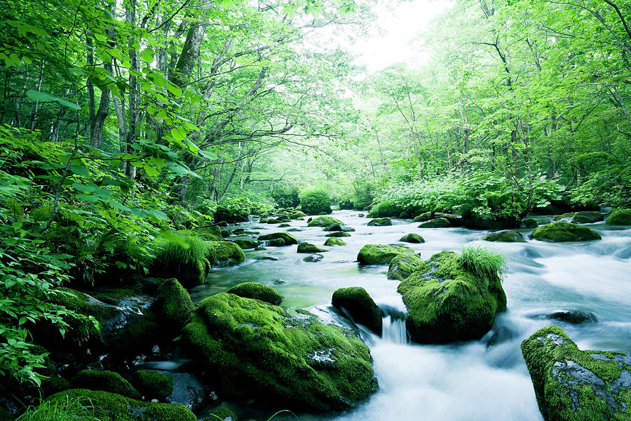Mountain Stream Photograph by Ooyoo