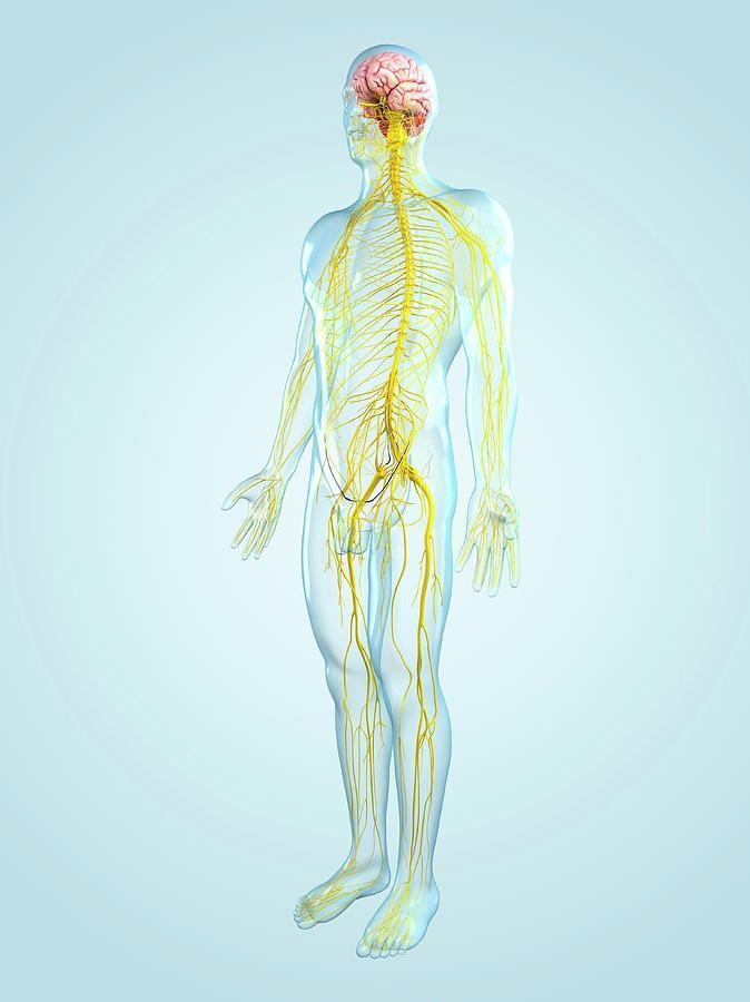 Nervous System, Artwork Digital Art by Sciepro