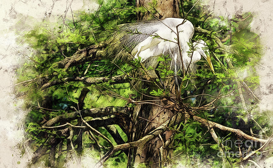 Nesting Egret by David Smith