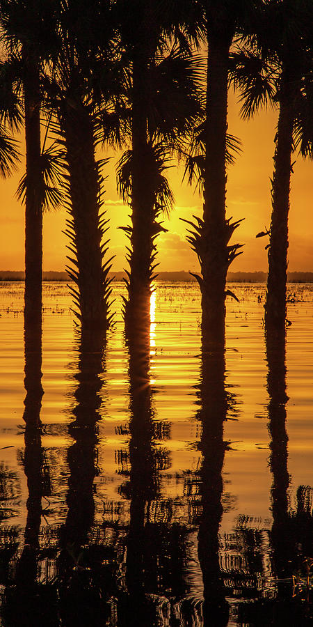Palm Tree Reflections by Stefan Mazzola