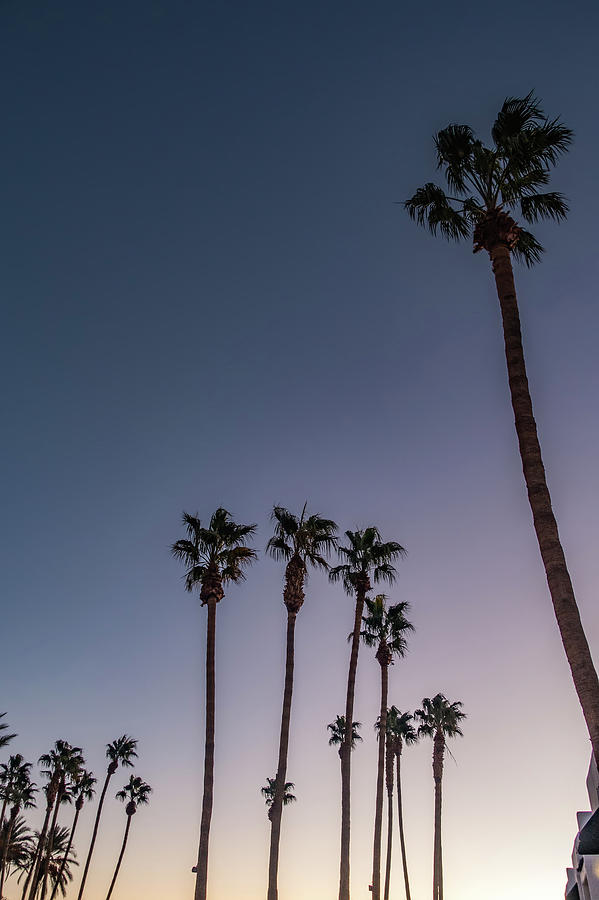 Palm Photograph - Palm Trees At Sunset On Boulevard In Los Angeles by Alex Grichenko
