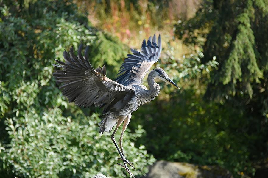 Pegasus Rising by Fraida Gutovich