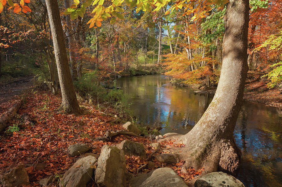 Pennypack Creek in Fall II by David Lamb