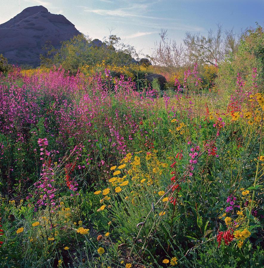 Phoenix Botanical Gardens Photograph by Richard Felber