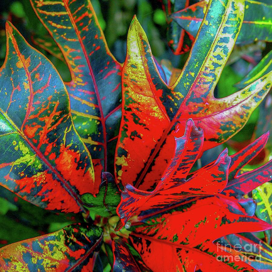 Plants and Leaves Hawaii by D Davila