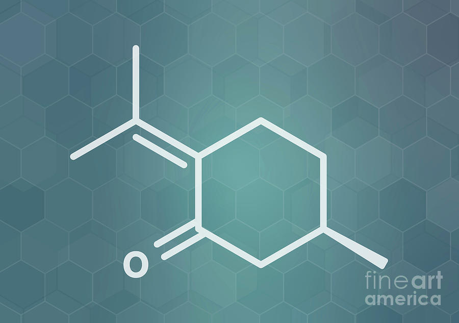 Nepeta Photograph - Pulegone Molecule 2 by Molekuul/science Photo Library