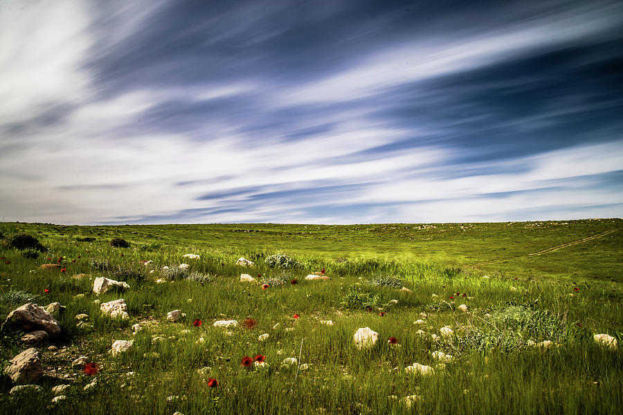 Red flowers and blue skies by Mati Krimerman