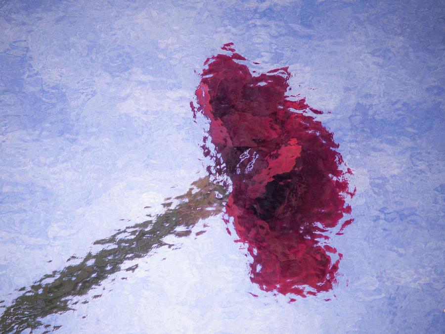 Red by Stewart Helberg
