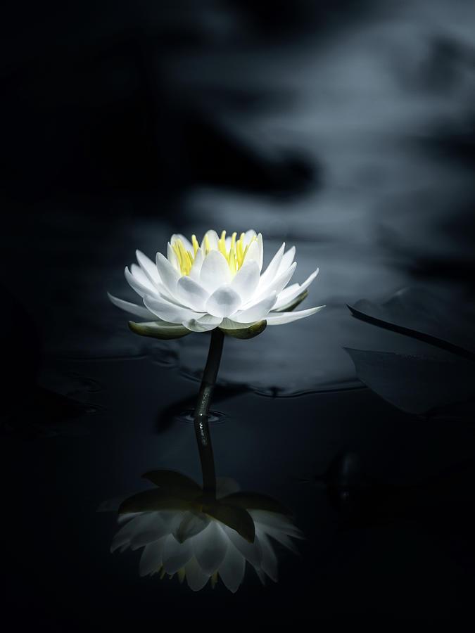 Zen Photograph - Reflection by Takashi Suzuki