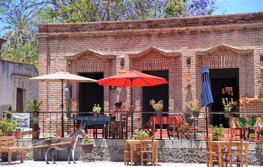 San Ignacio Baja by Lisa Dunn
