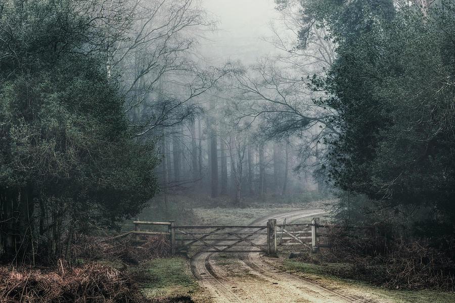 Oak Photograph - Sloden Inclosure - England by Joana Kruse