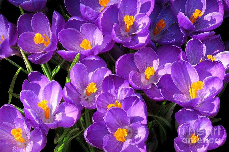 Spring has sprung by Frank Townsley