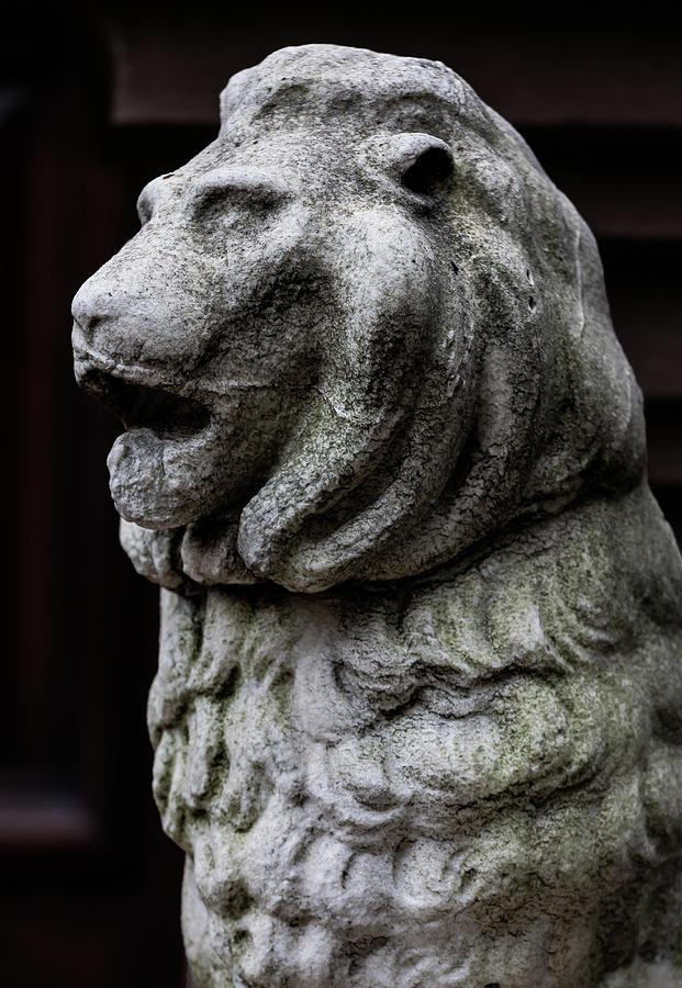 Stone Lion Photograph - Stone Lion by Robert Ullmann