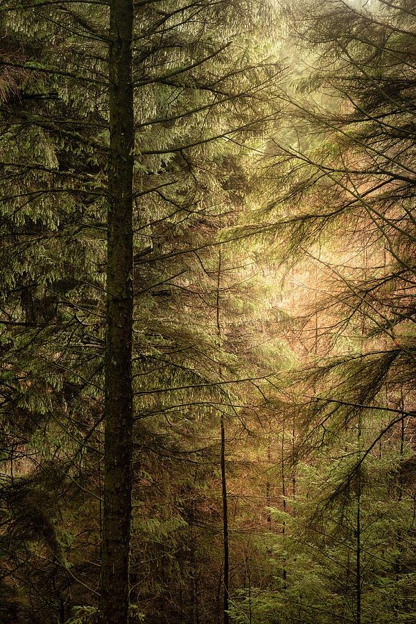 Landscape Photograph - Stunning Fine Art Landscape Image Of Winter Forest Landscape In  by Matthew Gibson