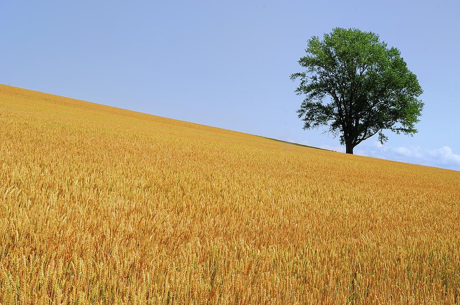 Summer In Hokkaido Photograph by Frank Chen