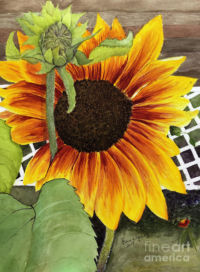 Sunflower by Bonnie Young