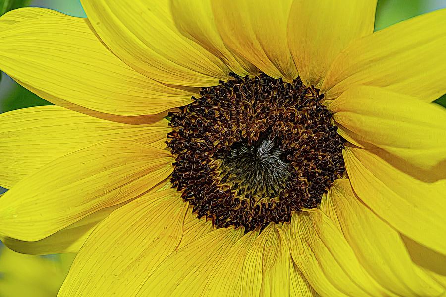 Sunshine by Cathy Kovarik