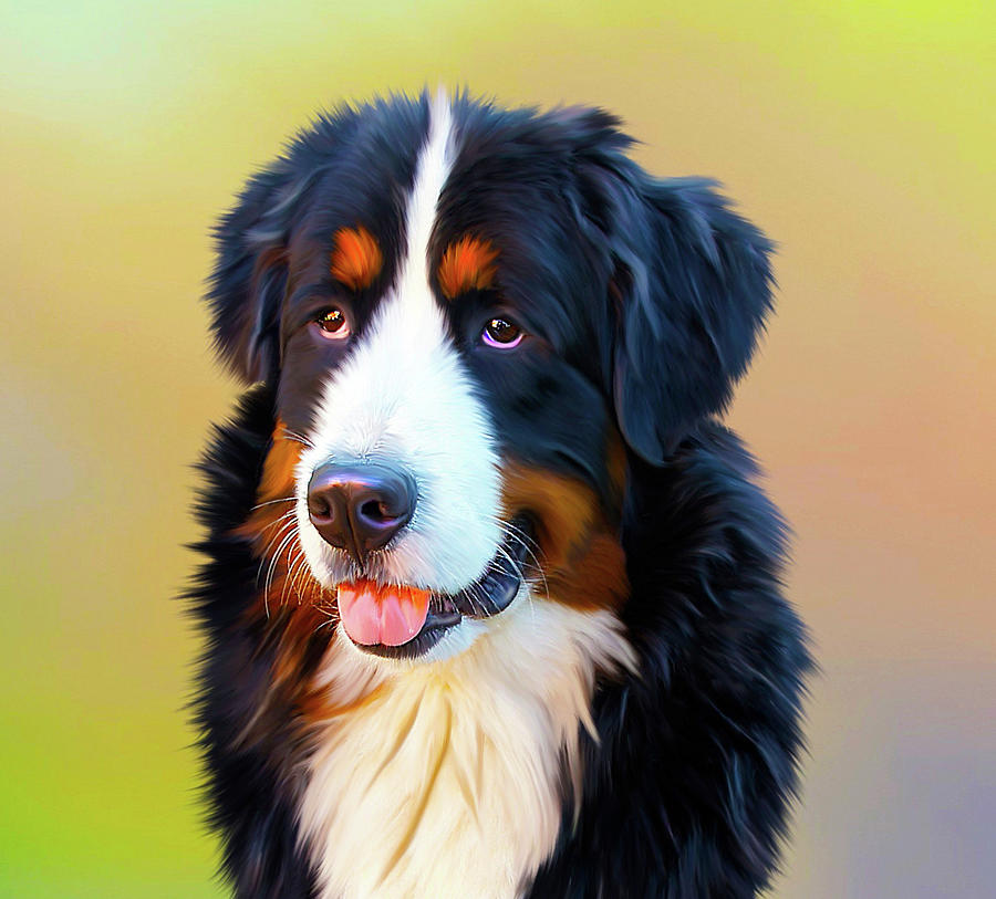Swiss Mountain Dog by Dave Byrne
