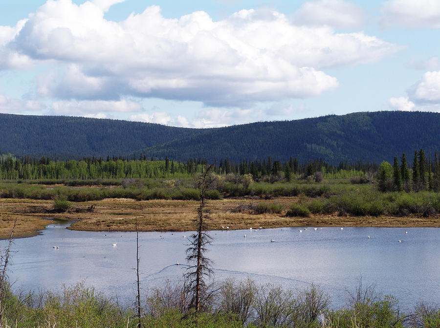 Tetlin National Wildlife Refuge Photograph