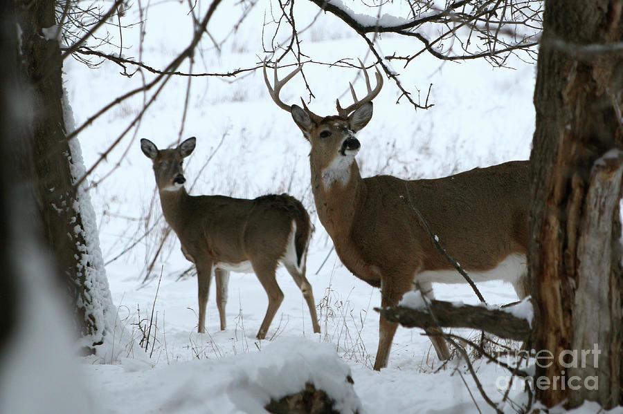 Deer Photograph - The Look by Lori Tordsen