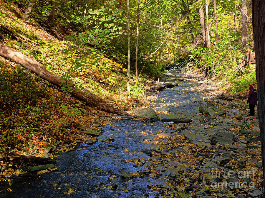 Tiffany Creek in Ancaster Ontario by Louise Heusinkveld
