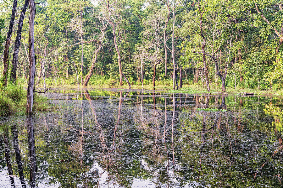 Trees Reflection In The Lake In Chitwan National Park, Nepal Photograph