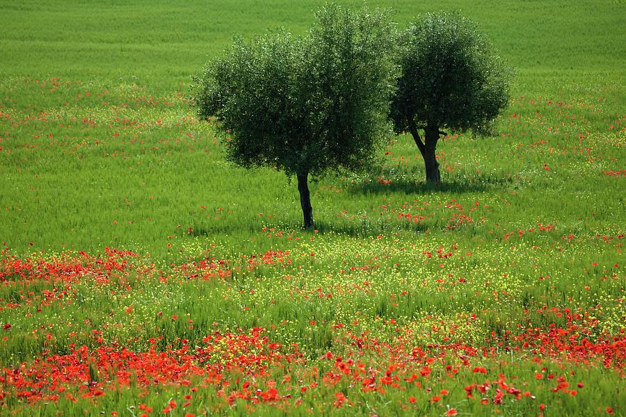 Tuscany 2008 Photograph by Ingmar Wesemann