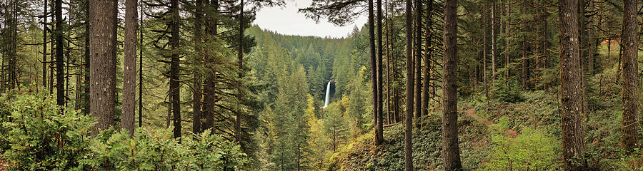 Horizontal Photograph - Waterfall In A Forest, North Falls by Panoramic Images