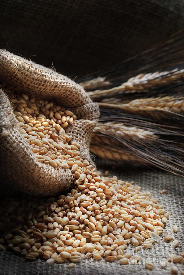 Wheat by Jelena Jovanovic