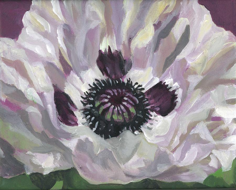 white poppy by Alfred Ng
