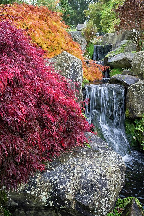 Wisley RHS Gardens  by Shirley Mitchell